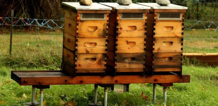 Biodynamic Beekeeping Rudolf Steiner College