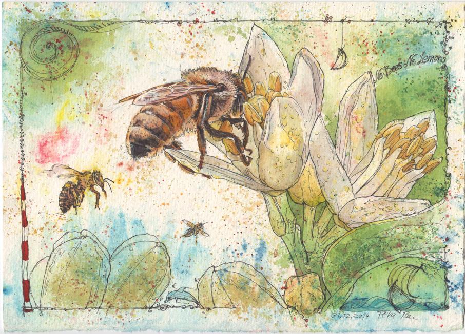 'No Bees'