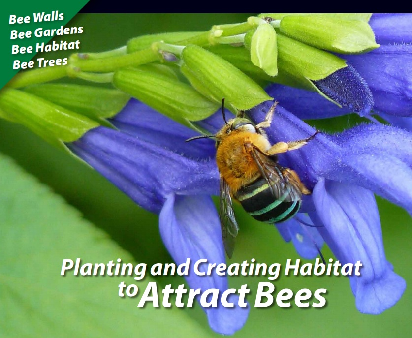 Planting & Creating Habitat to Attract Bees