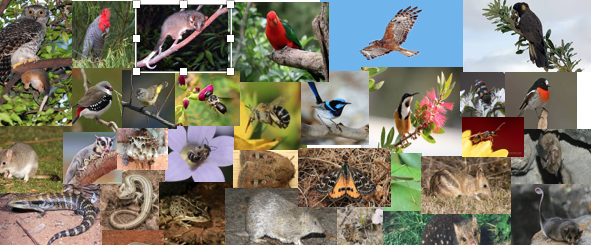 Cities are hotspots for threatened species