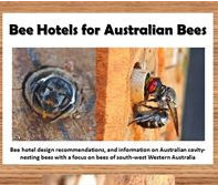 Bee Hotels for Australian Native Bees
